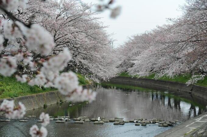 五条川0318.JPG